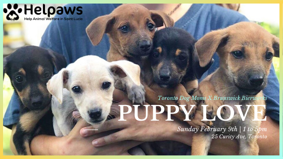 February 9th Puppy Love present by Toronto Dog Moms