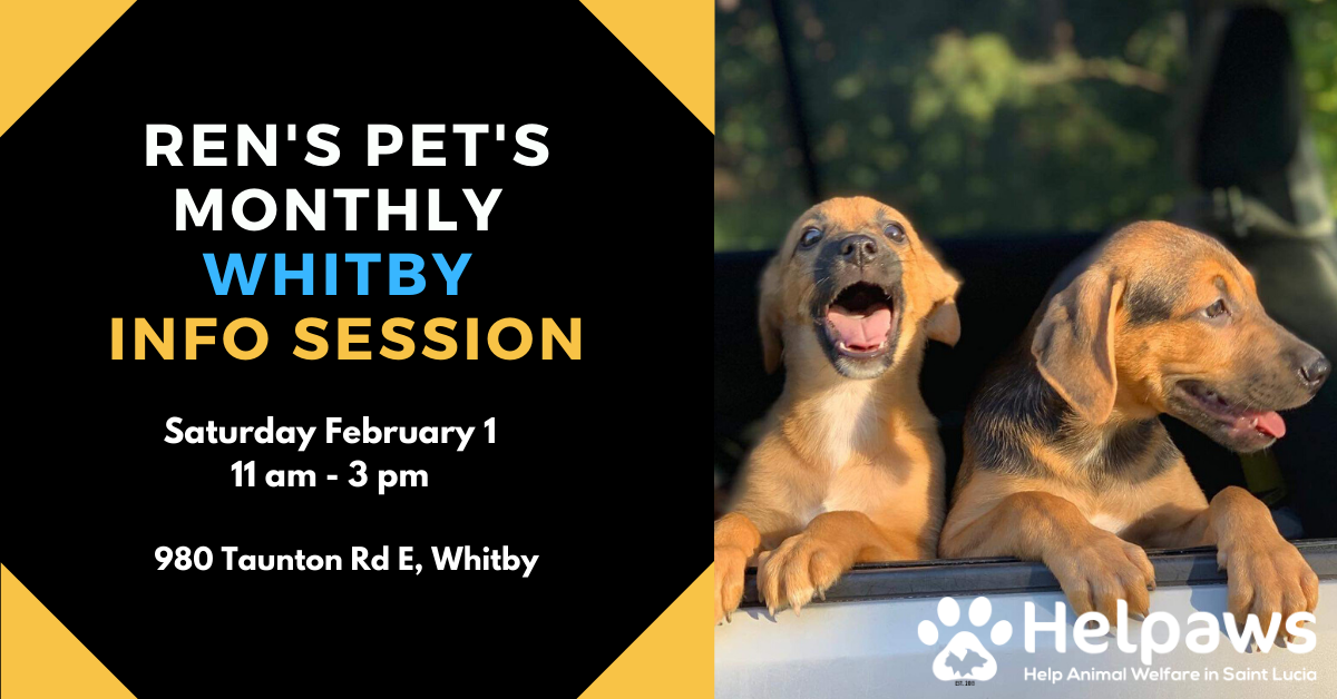 February 1st Ren's Pets Whitby Info Session