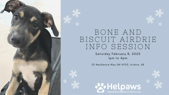 February 8th Bone and Biscuit Airdrie Info Session