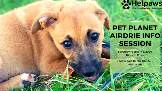 February 8th Pet Planet Airdrie Info Session