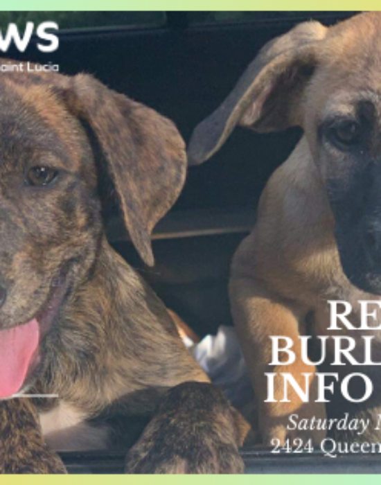 March 7th Ren's Pets Burlington Info Session
