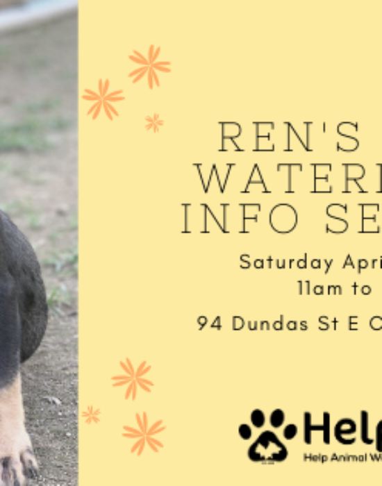April 4th Ren's Pets Waterdown Info Session
