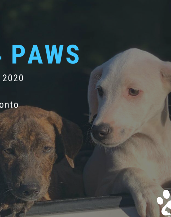 August 29th Party 4 Paws